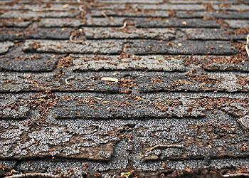 Mason City Roofing Images